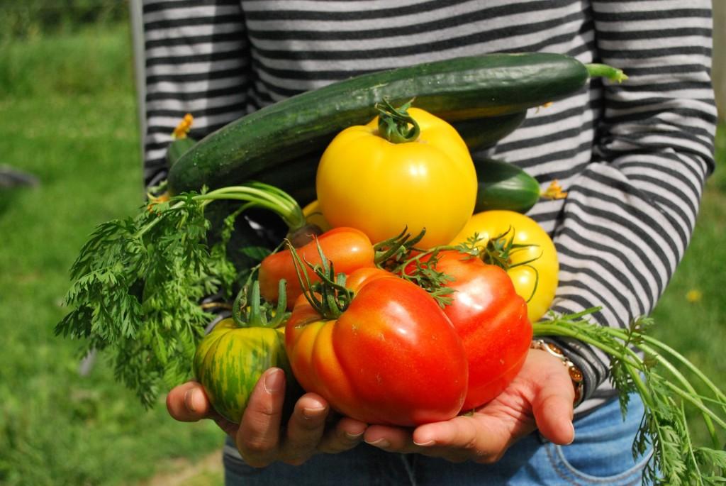 Realizzare un orto: regole basilari