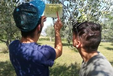 Monitoraggio mosca dell'olivo settembre – ottobre 2018