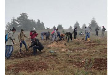 """Rinaturalizzazione e difesa della biodiversità della riserva naturale """"Monte Salviano"""" – novembre 2018"""