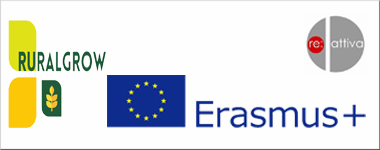 ERASMUS 380X150